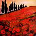Poppies by John Shipp