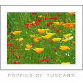 Poppies Of Tuscany Poster by Mike Nellums