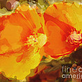 Poppies On Fire by Artist and Photographer Laura Wrede