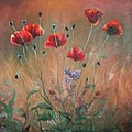 Poppies by Sorin Apostolescu