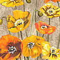 Poppies by Susan Dalby