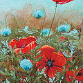 Poppies by Toni Wolf
