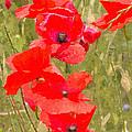 Poppies Vi by David Pringle