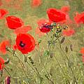 Poppies Viii by David Pringle