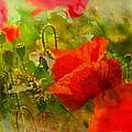Poppin Poppies by Ellen Cannon