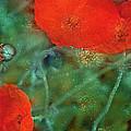 Poppy 30 by Pamela Cooper