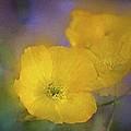 Poppy 31 by Pamela Cooper