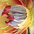Poppy 4 by Jacklyn Duryea Fraizer