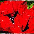Giant Poppy Art  by Roxy Hurtubise