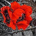 Poppy Art 5 by Roxy Hurtubise