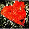 Poppy Art 6 by Roxy Hurtubise