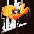 Poppy Art Poster Print by Bobbee Rickard