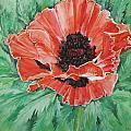 Poppy by Ellen Canfield