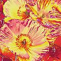 Poppy Extravaganza by Jane Schnetlage