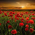 Poppy Field At Sunset by Evgeni Ivanov