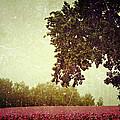 Poppy Field by Heike Hultsch