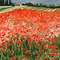 Poppy Field by Maryann Boysen