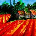Poppy Field  Sold by Lil Taylor