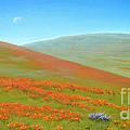 Poppy Fields by Jerome Stumphauzer
