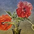 Poppy Flowers by Manfred Lutzius