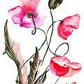 Poppy Flowers by Regina Jershova