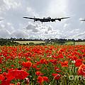 Poppy Fly Past by J Biggadike