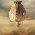 Poppy House by Jaroslaw Blaminsky