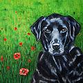 Poppy - Labrador Dog In Poppy Flower Field by Michelle Wrighton