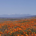 Poppy Land by Ivete Basso Photography