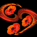 Poppy Love by Gill Billington