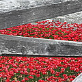 Poppy Memorial Tower Of London by Laura Lowrey