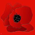 Poppy by Neil Finnemore