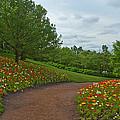 Poppy Path by Lindley Johnson
