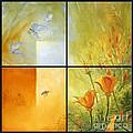 Poppy Pollination by Randy Wollenmann