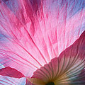 Poppy Rays Collage by Carol Groenen