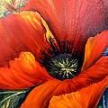 Poppy Red by Barbara Haviland