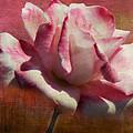 Poppy Rose by Linda Dunn