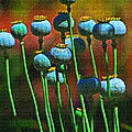 Poppy Seed Pods by Tom Janca