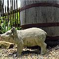 Pork Barrel by Kathy Barney