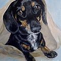 Dachshund Dog by Graciela Castro