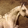 Portait Of A Stallion by Wes and Dotty Weber