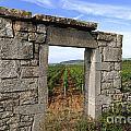 Portal Of Vineyard In Burgundy Near Beaune. Cote D'or. France. Europe by Bernard Jaubert