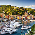 Portofino Summer Afternoon by George Oze