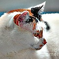 Portrait Of A Calico by Phyllis Kaltenbach