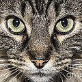 Portrait Of A Cat by Jeannette Hunt