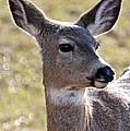 Portrait Of A Deer by Athena Mckinzie