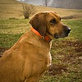 Portrait Of A Dog by Douglas Barnett