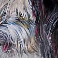 Portrait Of A Happy Shaggy Dog by Holly Angelique