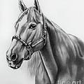 Portrait Of A Horse by Lena Auxier