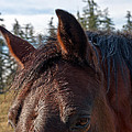 Portrait Of A Horse by Tikvah's Hope